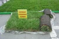 Рулонный газон стал дешевле!!!