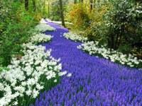 Альпинарий и цветники